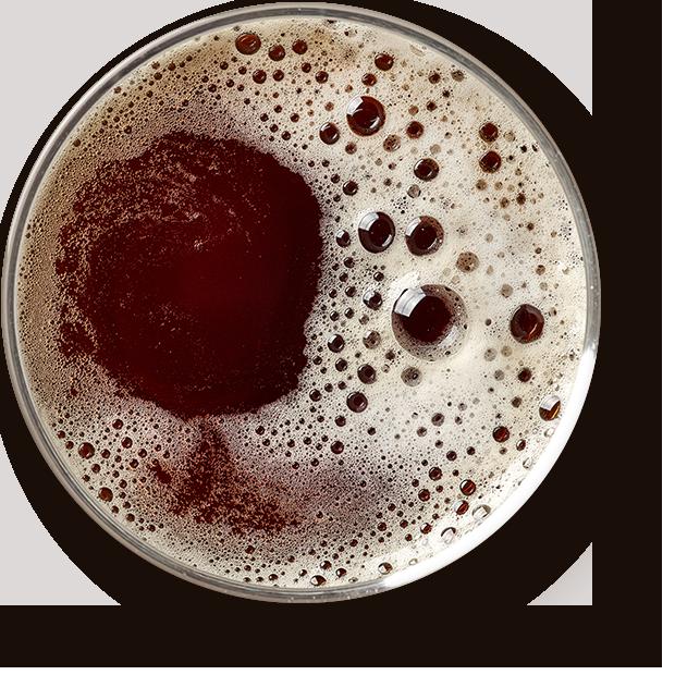 https://www.lesbrasseursdelavie.com/wp-content/uploads/2017/05/beer_transparent.png